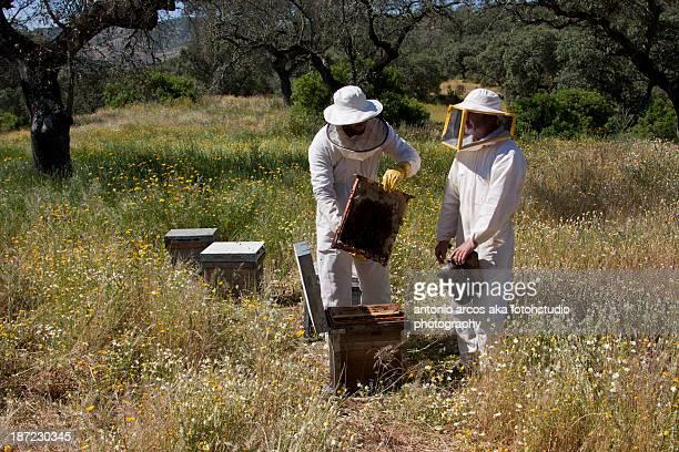 beekeepers - 養蜂家 ストックフォトと画像