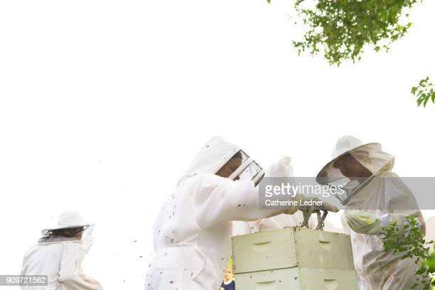 Beekeepers tending to hive