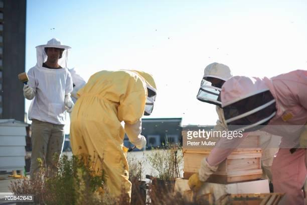 Beekeepers tending trays on city rooftop