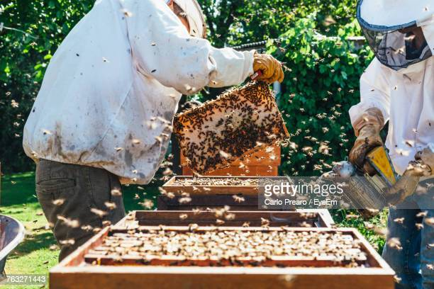 beekeepers working with bees - 養蜂家 ストックフォトと画像