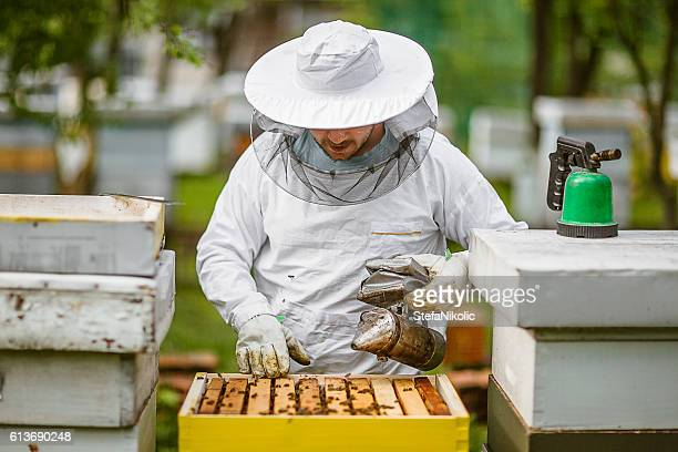 Beekeeping as a way of life