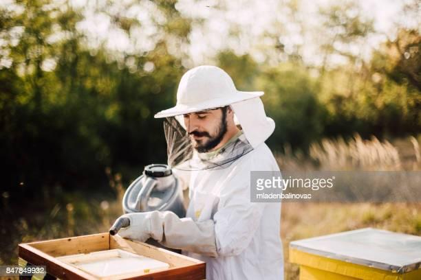 養蜂ビジネス - 養蜂家 ストックフォトと画像