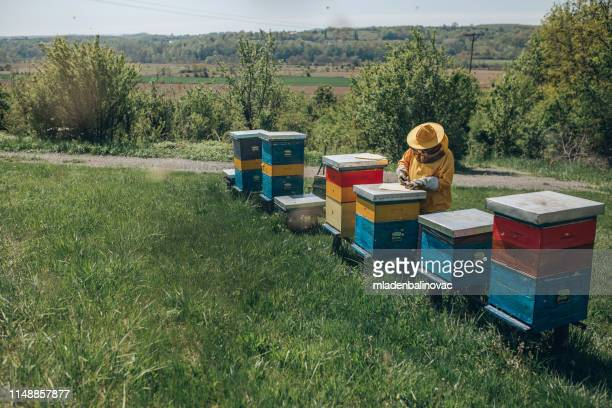 beekeeping job - beehive stock pictures, royalty-free photos & images