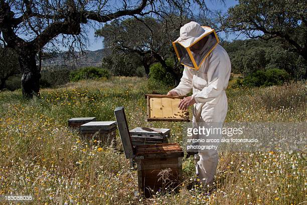 Beekeeping.