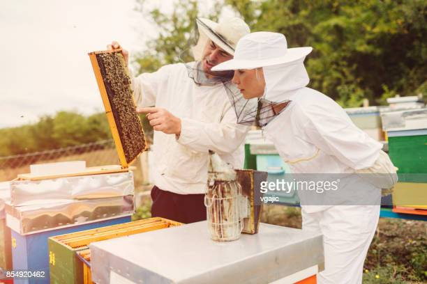 beekeeping - beehive stock pictures, royalty-free photos & images