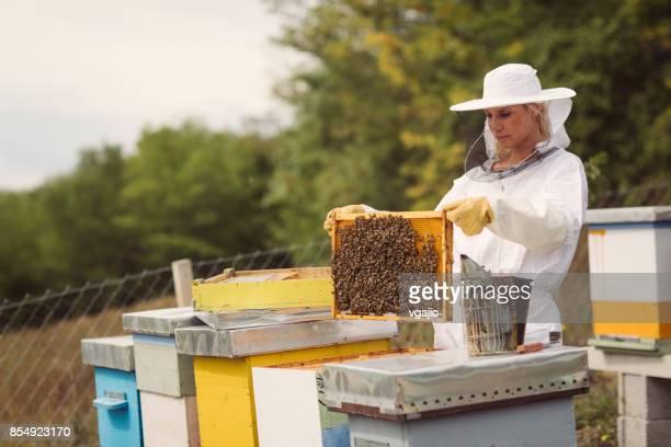 Die Bienenzucht
