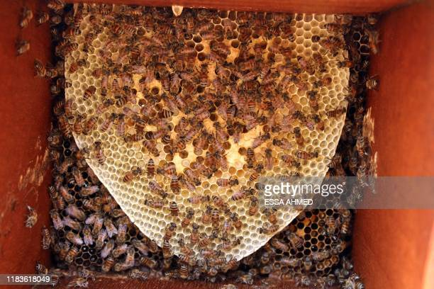 Bees are seen on a honeycomb at an apiary in Yemen's northern Hajjah province on November 10, 2019. - The conflict between the Saudi-backed...