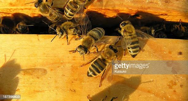bees at sunset