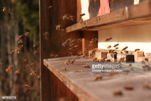 Bees At Wooden Insect Hotel