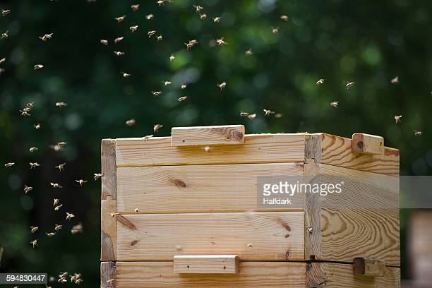 Bees flying around beehive at farm