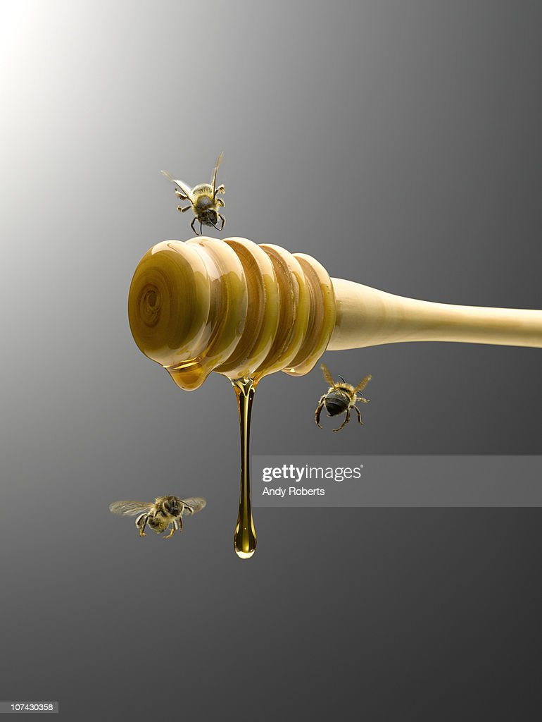 Bees flying around honey dipper dripping with honey : Stock Photo