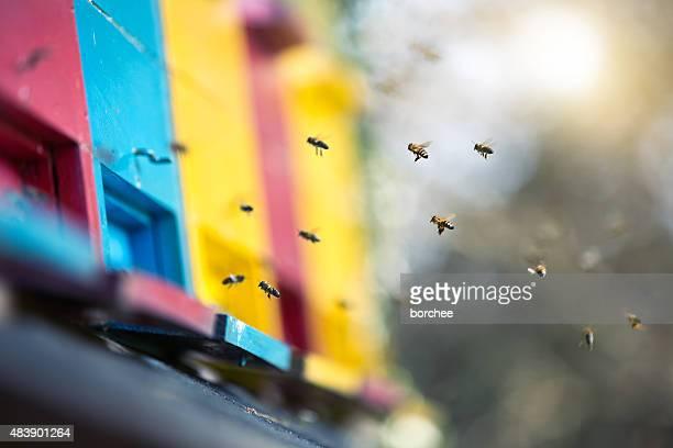 Abejas volando al Hive