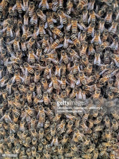Bees inside a hive