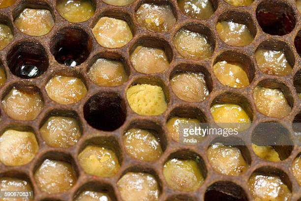 Bees Old combs with alveolus filled with pollen