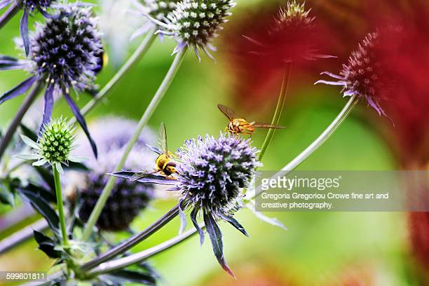bees on flowers - gregoria gregoriou crowe fine art and creative photography. stock photos and pictures