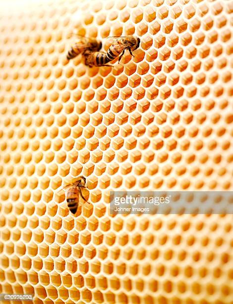 bees on honeycomb - beehive stock pictures, royalty-free photos & images