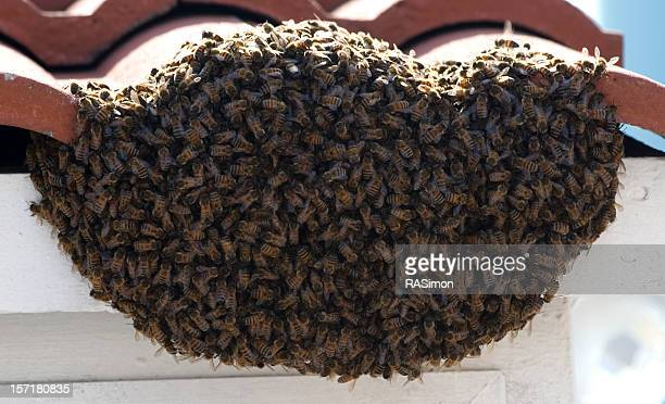 bees! - eaves stock photos and pictures