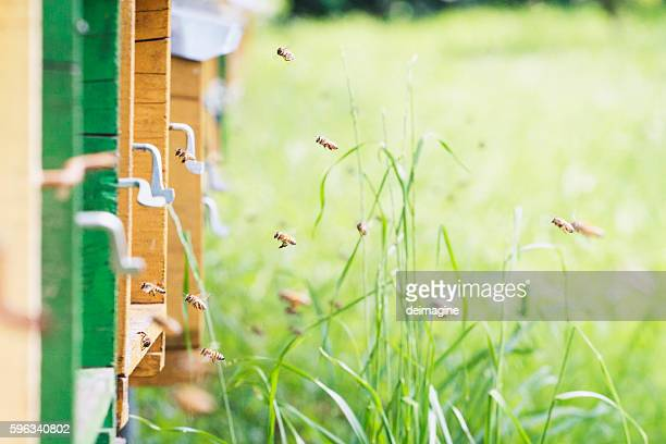 Bees work in the hive, beekeeping
