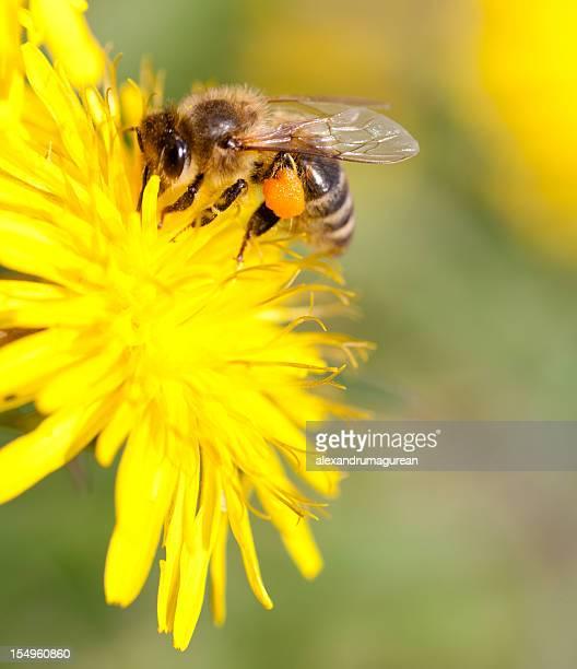 Bienen Arbeiten