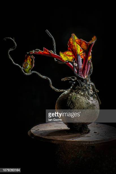 beet_1 - ian gwinn stock pictures, royalty-free photos & images