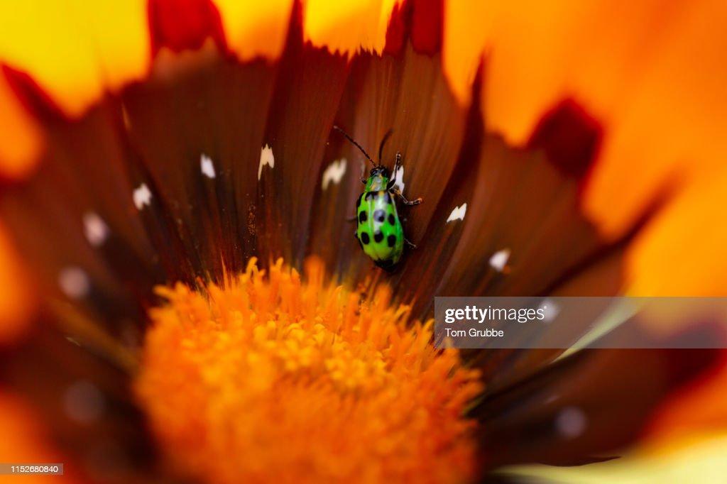 Beetle Bunker : Stock Photo