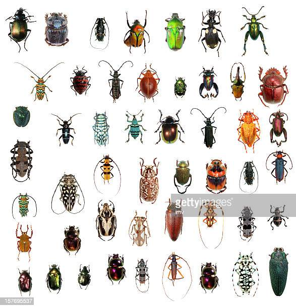 beetle collection xxxl - insect stock pictures, royalty-free photos & images