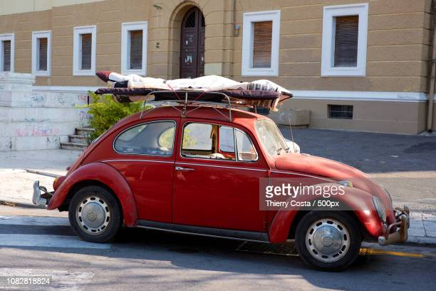 beetle - christmas beetle stock pictures, royalty-free photos & images