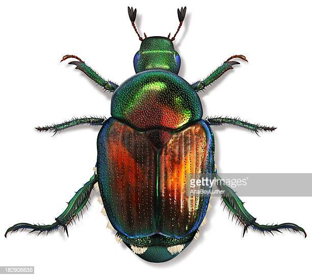 beetle - beetle stock pictures, royalty-free photos & images