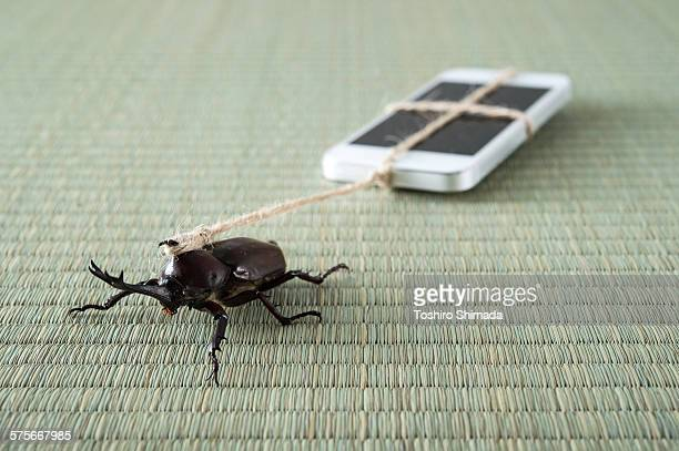 a beetle pulling a mobile phone - irony stock pictures, royalty-free photos & images