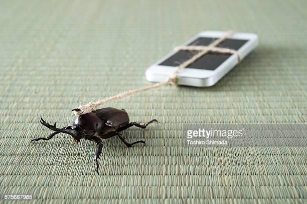 a beetle pulling a mobile phone - irony stockfoto's en -beelden