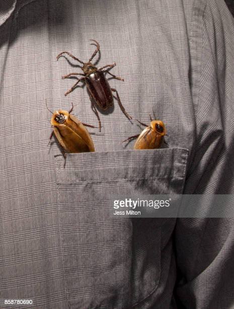 Beetles crawling out of pocket