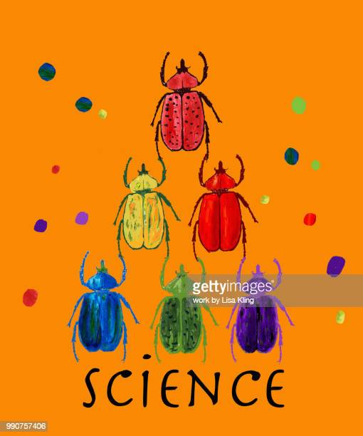 Beetles, Insect Entomology Science -  Typography
