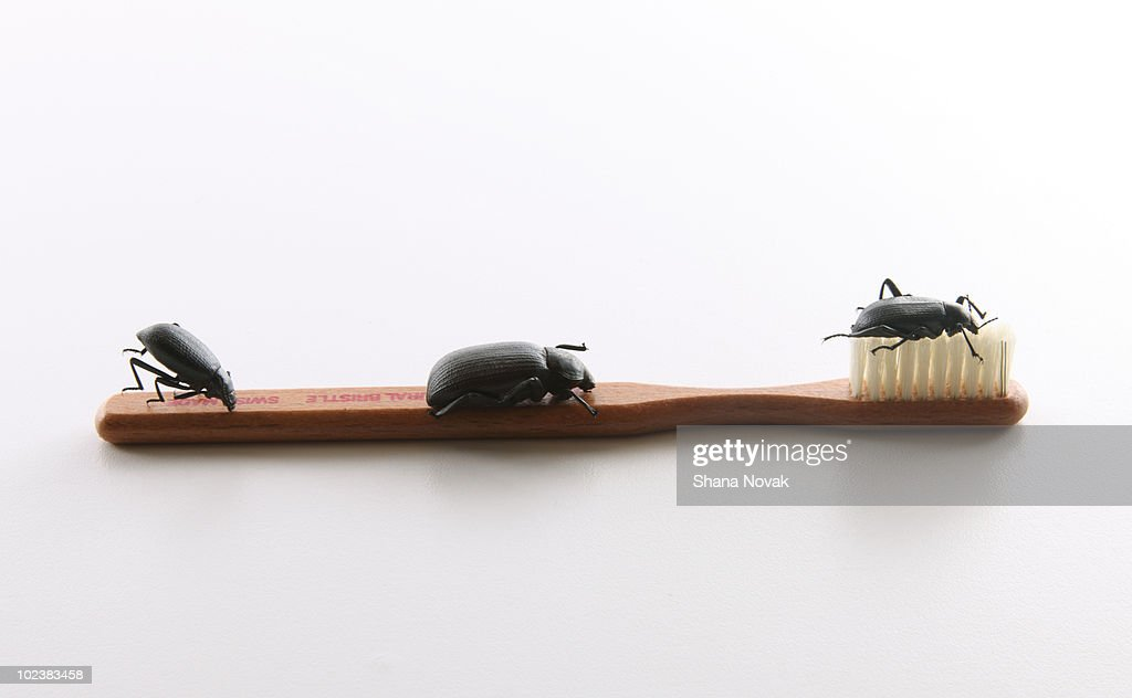 Beetles on a Toothbrush : Stock Photo