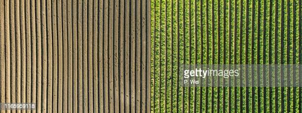 before and after: agriculture over a soybean farm - soybean stock pictures, royalty-free photos & images