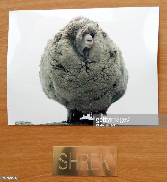 A before photo of the world famous sheep Shrek is seen on a plaquebox of wool presented to New Zealand Prime Minister Helen Clark at the parliament...