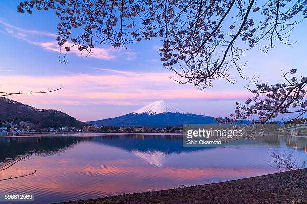 before rising sun, mt.fuji with cherry blossoms - 逆さ ストックフォトと画像
