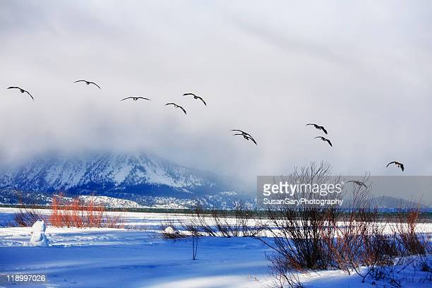 before storm - nevada stock pictures, royalty-free photos & images