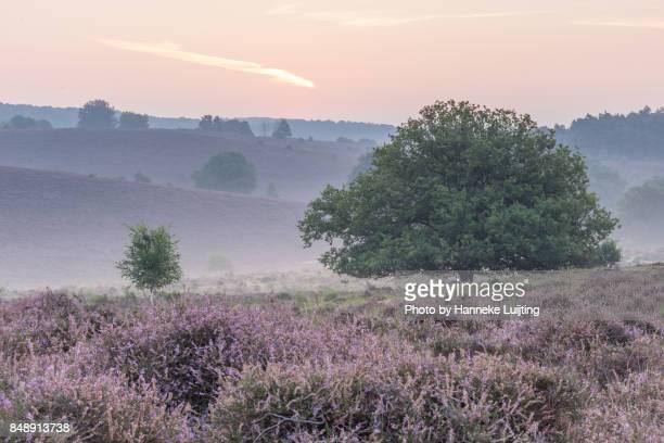 before sunrise, veluwezoom national park - posbank ストックフォトと画像