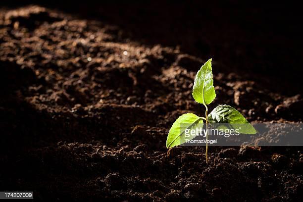 Inicios-Small árbol misterio luz natural