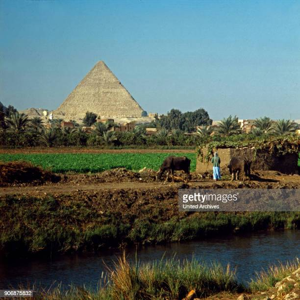 Behind a Nile canal and fertile ground the pyramid of Khufu raises at Giza near Cairo Egypt late 1970s