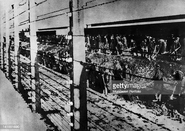 Behind an electric fence prisoners of Auschwitz Concentration Camp digging a ditch Auschwitz 1940s