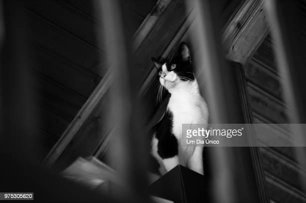 behind bars - um animal stockfoto's en -beelden