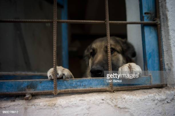 behind the bars - cage stock pictures, royalty-free photos & images