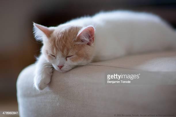 Beige and white kitten sleeping on ottoman