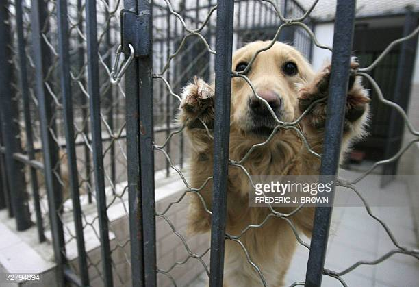 A dog that was seized due to concerns by Beijing authorities last month over the growing number of canines in the city and the rising incidence of...