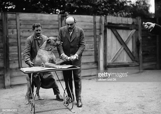 Beim Tierarzt Ein kranker Hund wird behandelt Anlegen einesn Verbandes an der Pfote undatiert vermutlich 1911veröffentlicht Praktische Berlinerin...