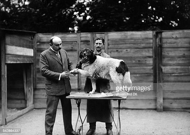 Beim Tierarzt Ein kranker Hund wird behandelt der an der Pfote verletzt ist undatiert vermutlich 1911Foto Conrad HünichFoto ist Teil einer Serie