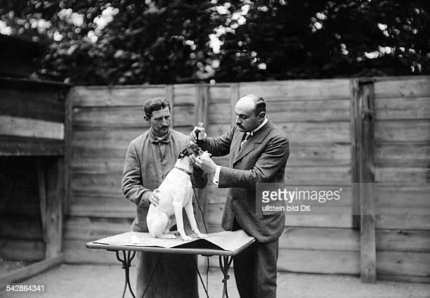 Beim Tierarzt Ein kranker Hund wird behandelt er erhält Medizin undatiert vermutlich 1911Foto Conrad HünichFoto ist Teil einer Serie