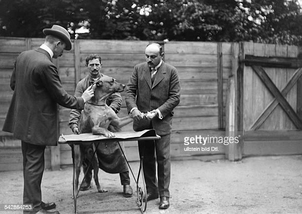 Beim Tierarzt Ein kranker Hund wird behandelt undatiert vermutlich 1911Foto Conrad HünichBild ist Teil einer Serie