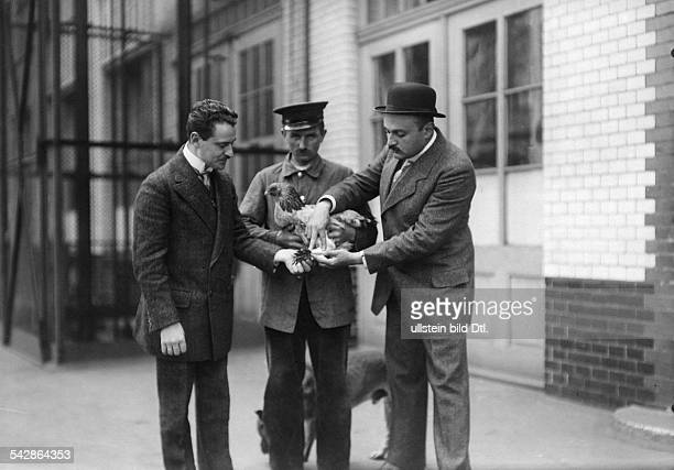 Beim Tierarzt Ein krankes Huhn wird untersucht undatiert vermutlich 1911Foto Conrad HünichFoto ist Teil einer Serie